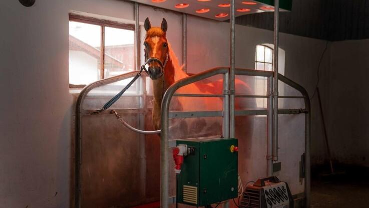 Ny kæde med wellness til heste