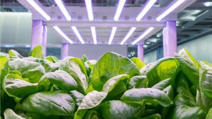 Fremtidens fødevarer dyrkes på hylder i en container