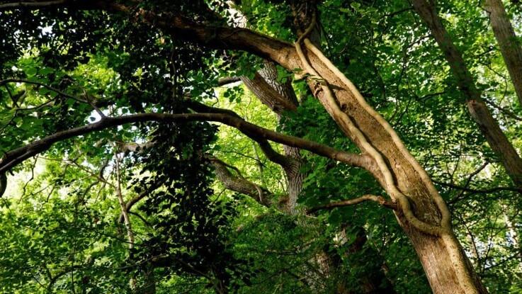 6.000 danskere køber naturskov