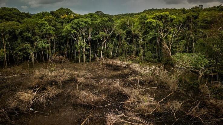 Tropisk skove forsvinder i skræmmende tempo