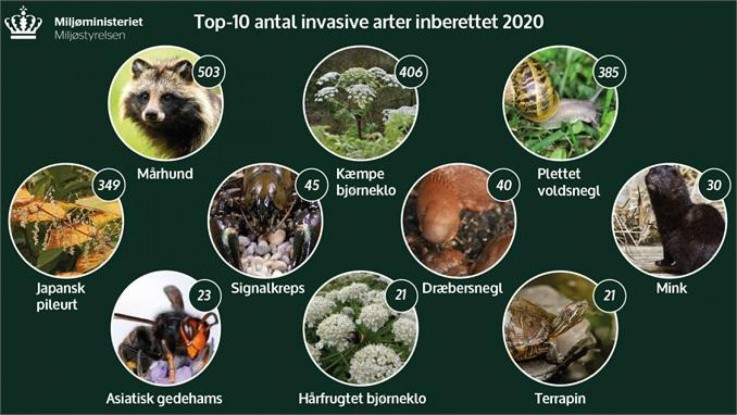 Stigning i invasive arter i 2020