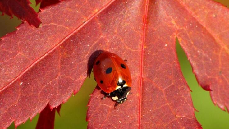 Tysk undersøgelse: Biodiversitet i skoven