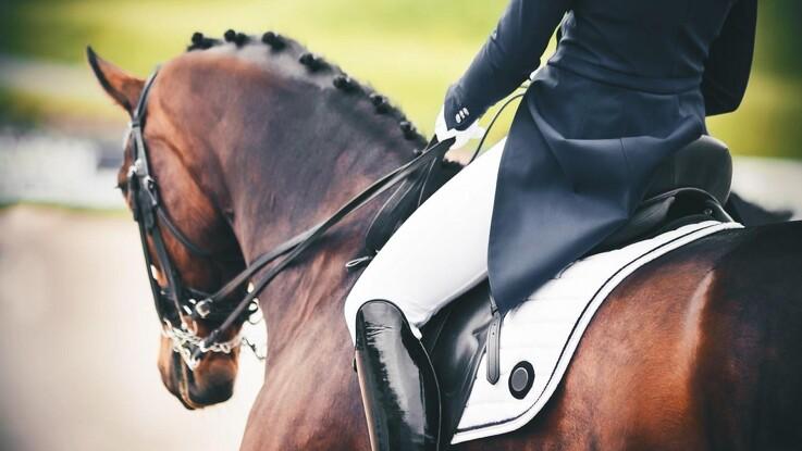 Halthed er de hyppigste skader hos heste