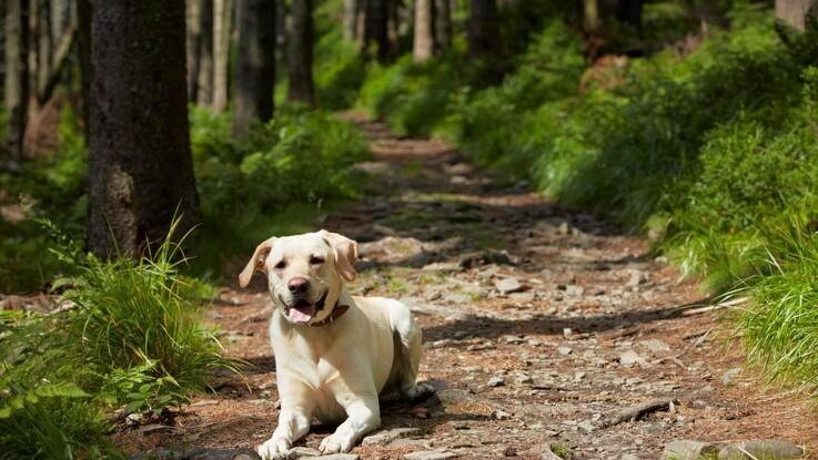 Pas på hunden i den kommende flåtsæson