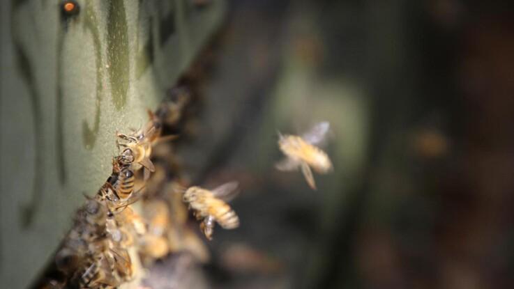 Biavlere skal registreres