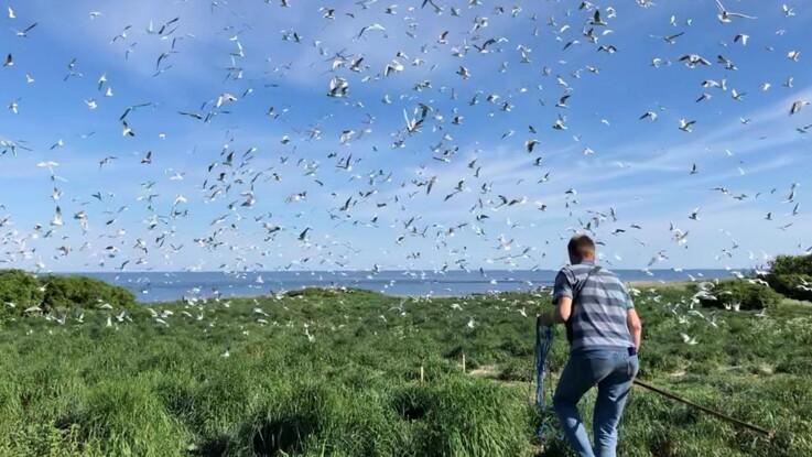 Vandfugle og vildt skal droneovervåges