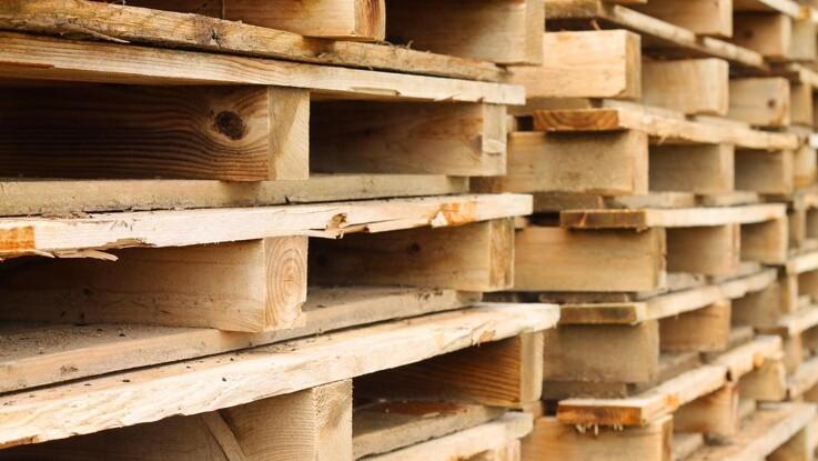 Hold øje med skadelige biller i dine træpaller