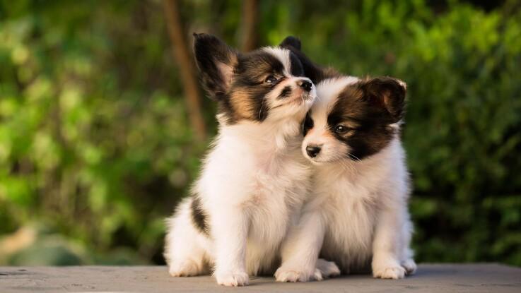 Husk ansvarsforsikringen, når du får hund