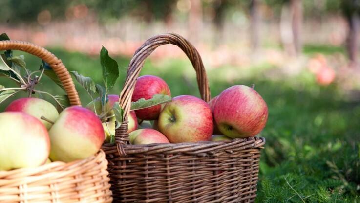 Svendborg er Danmarks æblehovedstad