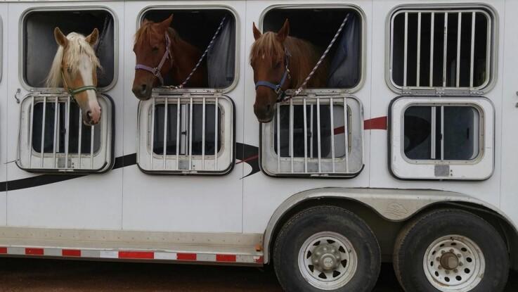 Nye regler for at flytte heste