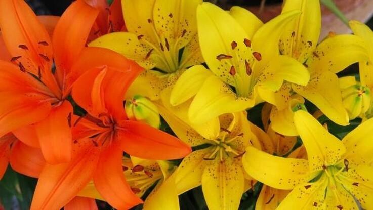 De smukkeste blomster til din have