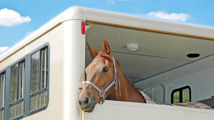 Hestetransport: Der er kun én regel, du skal kende