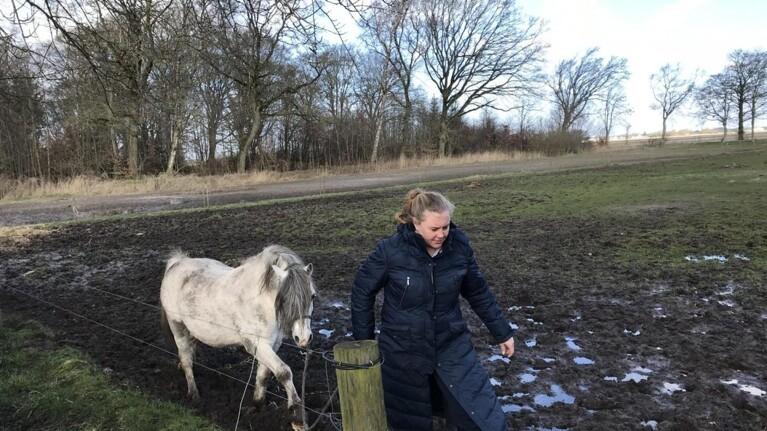 Hesteavler: Dyrkningsforbud kan slå din hest ihjel