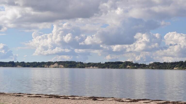 Morild-alge blomstrer i Limfjorden