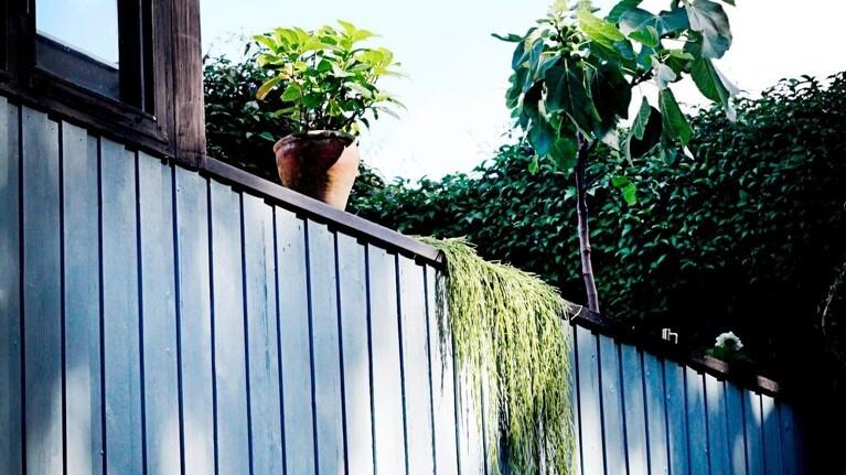 Pas på farven på hegnet