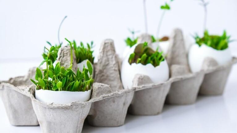 Gratis goder: Lad planterne få glæde af dit køkkenaffald