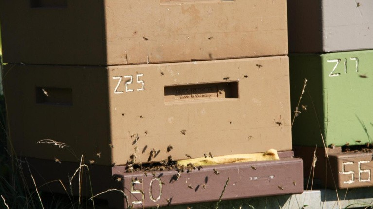 Honningbier kortlægger miljøbelastninger