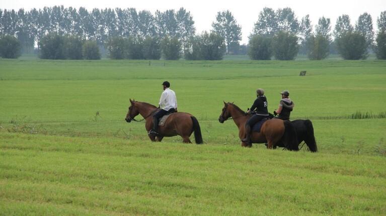 Løs hund skræmte heste: Tre ryttere kastet af