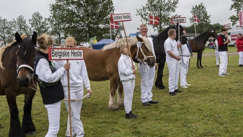 Heste slår rekorder på Landsskuet