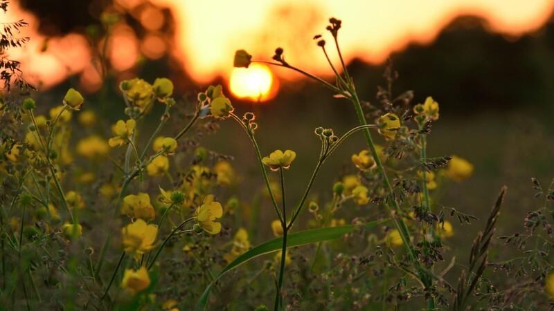 DMI: Sommeren er ikke forbi endnu