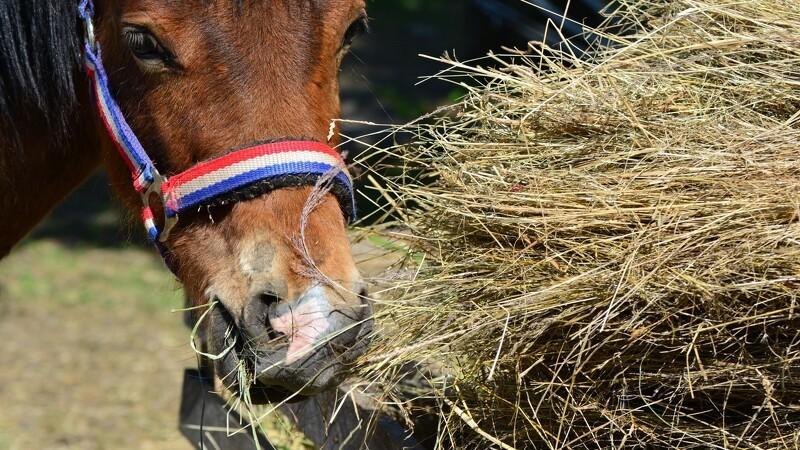 Mangel på hø giver heste-udfordringer