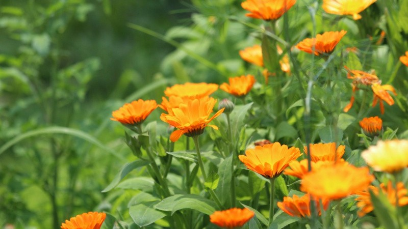 Sådan samler du frø og får gratis planter