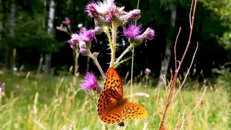 Inviter sommerfuglene ind i haven