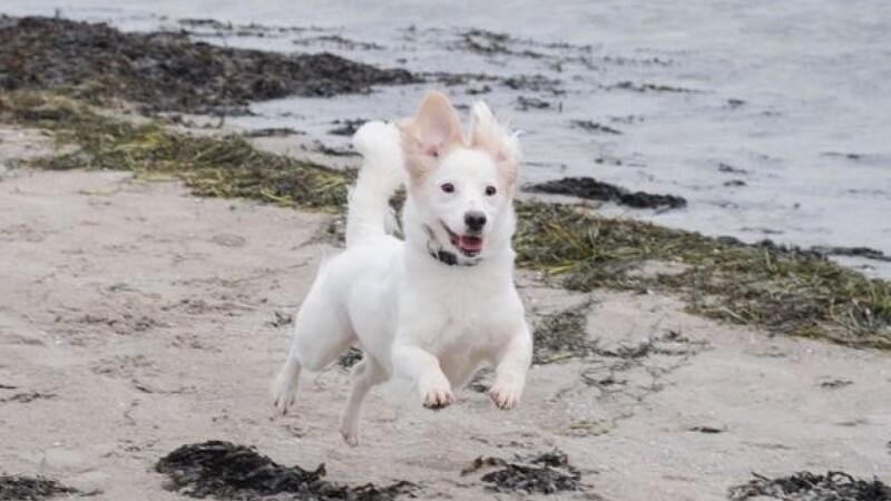 1. oktober må du slippe hunden løs på stranden