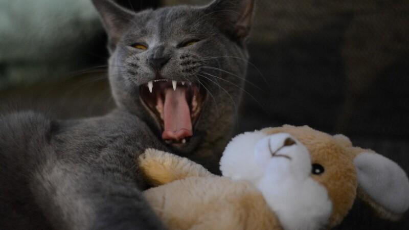 Undgå krig mellem kat og baby