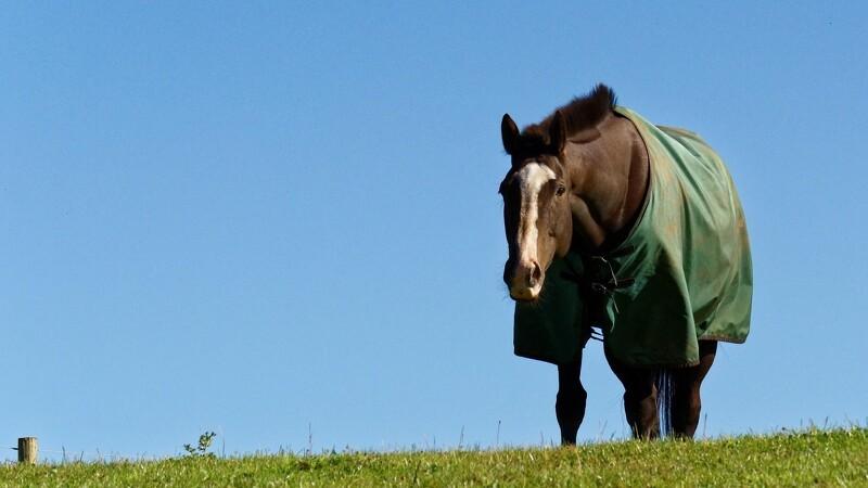 Advarsel: Dækkener kan være skadelige for din hest