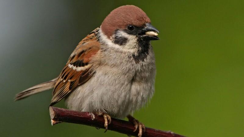 Undgå havens fuglefælder