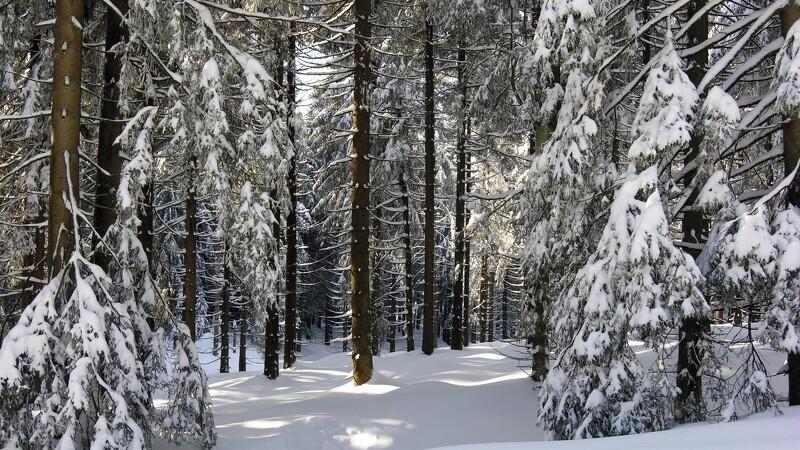 Naturen er et skatkammer af julegrønt