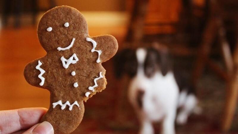 Giv hunden sunde julegodter
