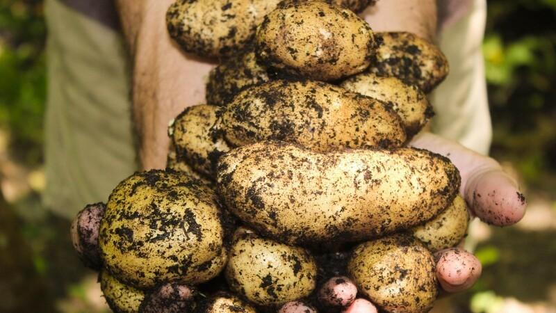 Jesper Theilgaard er årets kartoffel-ambassadør