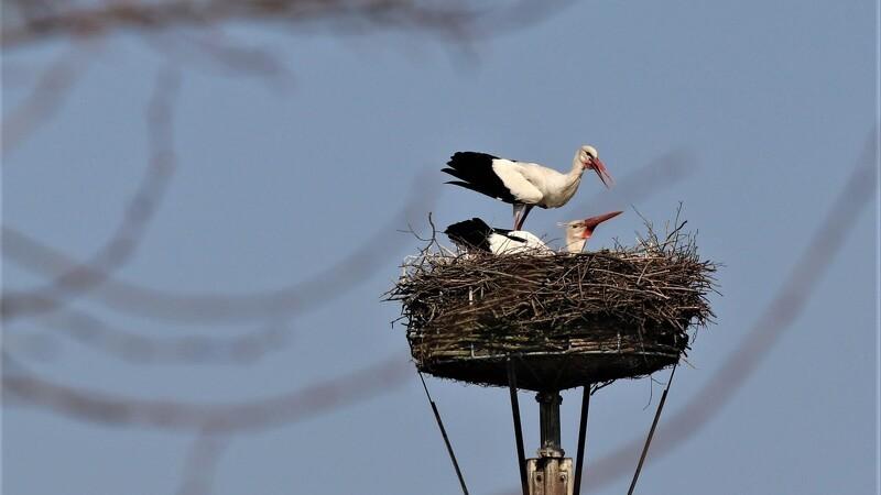 Sønderjysk storkepar får egen sø