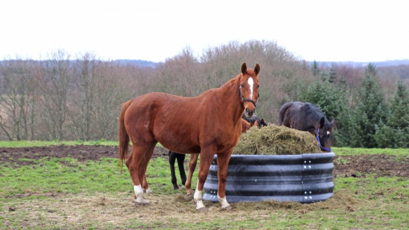 Mobil foderring til heste mindsker spild