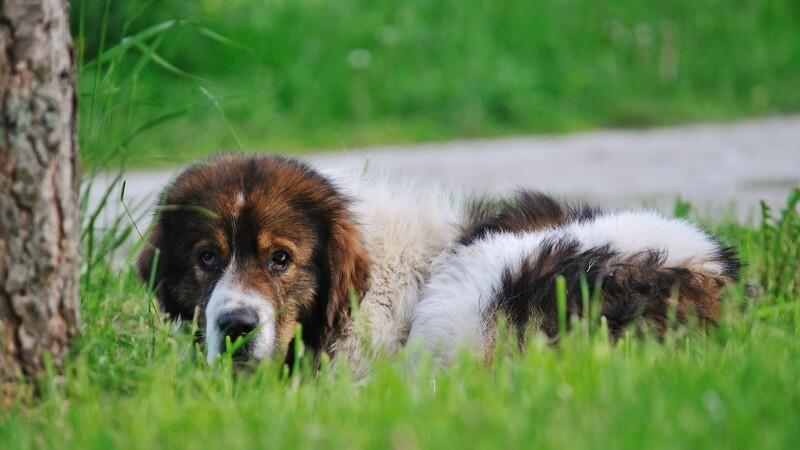 Sådan giver du hunden førstehjælp