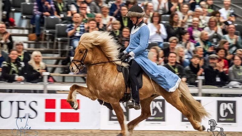 Islandske heste erobrer Herning