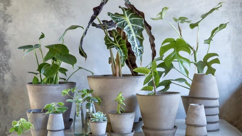 Sådan planter du korrekt i potter