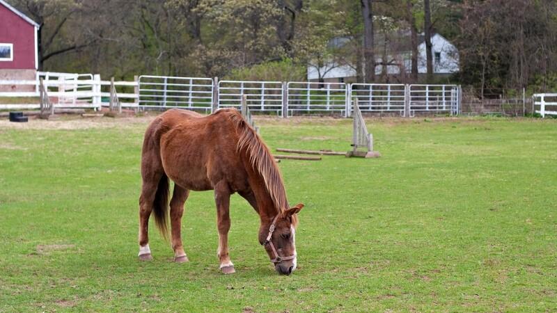 Hjælp din hest godt ind i foråret
