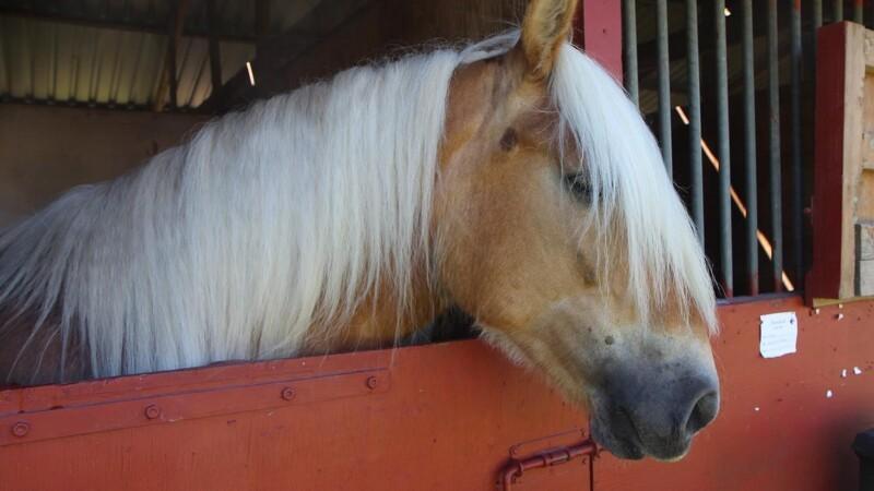 Hesterekord på Roskilde Dyrskue