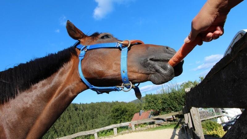 Dyrlægens liste over gode og dårlige hestegodter.
