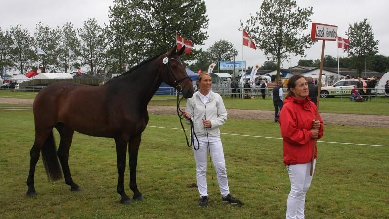 Heste sætter ny rekord på Landsskuet