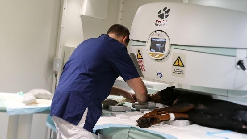 Nu kan kæledyr også blive MR-scannet