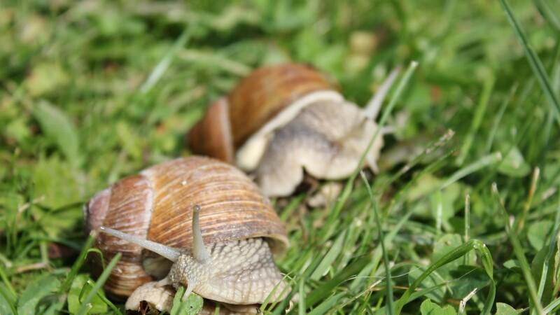 Få styr på sneglene i haven