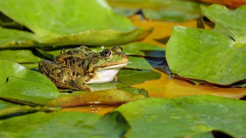 Vild natur og dyreliv hitter haverne