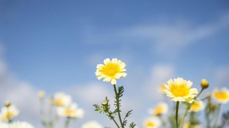 Blomsterstriber kan blive til vinterhjem for insekter