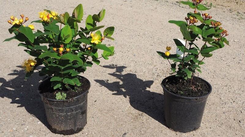 Højere standard for planter