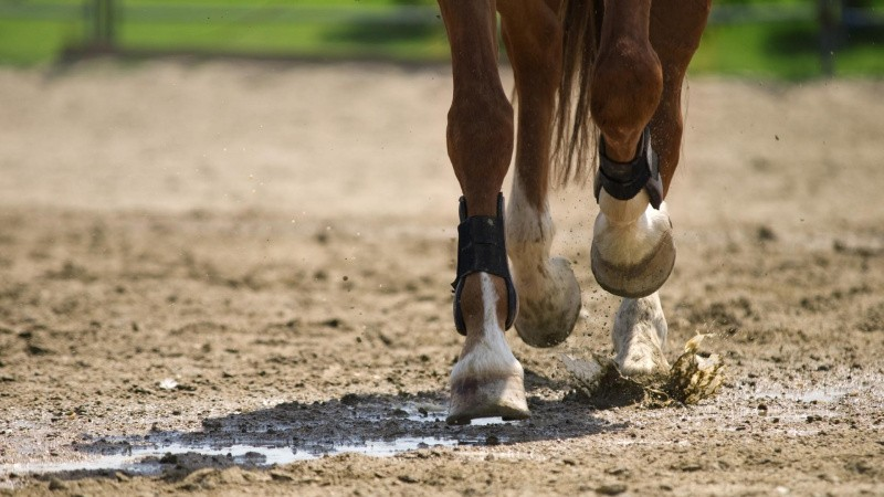 Myte-tjek: Er sorte hestehove bedre end hvide?