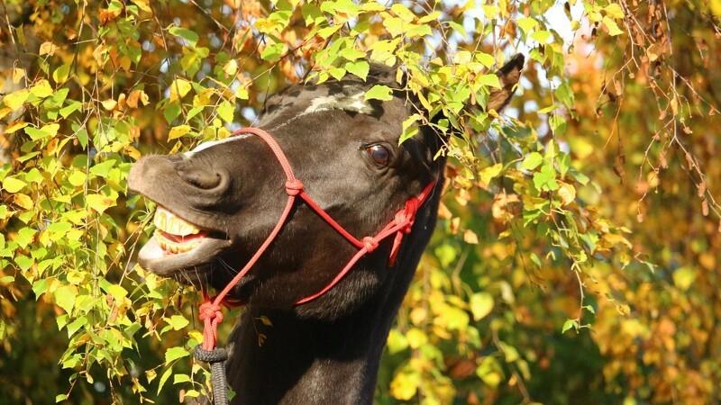 Sådan bliver du og din hest klar til efteråret